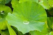 Waterdrop On Leave