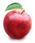 Red apple with leaf isolated on a white background. File contains clipping paths.