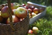 Detail shot of basket and crate of apples on grass