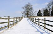 picture of split rail fence  - Tree and fence after January snow storm - JPG