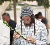 JERUSALEM, ISRAEL - SEPTEMBER 18, 2013: Young religious Jew in a gray skullcap carefully chooses rit