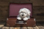 Traveling With A Pet - Puppy Dog Sitting In A Suitcase - Concept For Traveling.