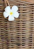White Plumeria Stuck On Wicker Basket Background.