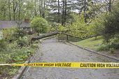 Caution High Voltage Tape, Tree And Wires Down