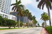 Wide road with tall palms and modern buildings in Miami Beach Florida.