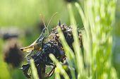 Mantis Macro