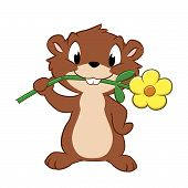 image of gopher  - Vector illustration of a cartoon gopher devouring garden flower - JPG