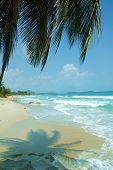 Sandy Beach With Palms