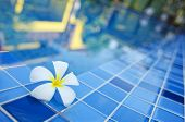 Flower By Pool With The Reflection