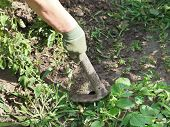 image of husbandry  - weeding grass in garden with a hoe on a summer day - JPG