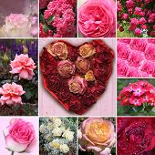 Collage Of Rose Blossoms And Rose Flower Heart