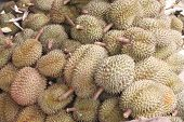 Fresh Durian Fruit.