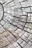 Close - up Natural wood texture and background