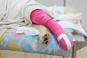 Pink Bandage Covering Golden Retriever Back Leg