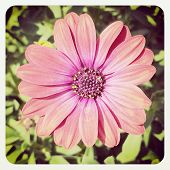 Pink Flower with Instagram effect