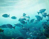 school of fish underwater. Similan islands. Thailand