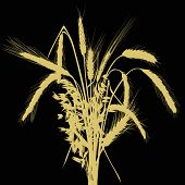 illustration with wheat silhouettes isolated on black background