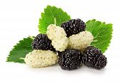 Black And White Mulberry Isolated On The White Background