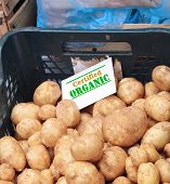 foto of crate  - Potatoes pile in plastic crates with certified organic sign on top sold on market - JPG
