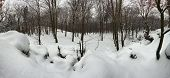 Forest Panorama In Winter - 360 Degrees