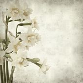 stock photo of narcissi  - textured old paper background with doule narcissi