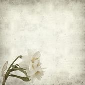 stock photo of narcissi  - textured old paper background with doule narcissi - JPG