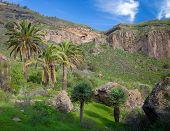 Gran Canaria, Calder De Bandama After Winter Rains