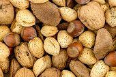 Brazil Nuts, Hazelhuts, Walnuts And Almond Background Texture