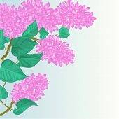 Lilac Spring Background Vector