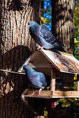 Pigeons On A Birds Feeder