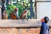 Nepalese man teasing monkeys