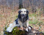 funny dog sitting on a stump in the woods
