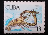 Cuba - Circa 1969: Postage Stamp Printed In Cuba Shows A Color Image Underwater Creatures Cancer Lon