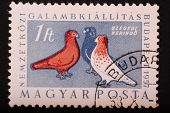 Hungary - Circa 1957: Postage Stamp Printed In Budapest Pokazyaaet Image Of Three Colorful Pigeons O