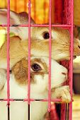 White Striped Rabbit In A Cage.