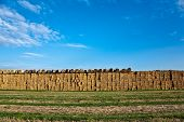 Bale Of Straw In Automn In Intensive Colors