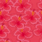 seamless pink background with pink hibiscus flowers.
