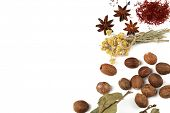 Different spices and herbs isolated on white