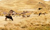 Farm Along The Cusco-puno Road, Peru