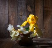 Three Irises in clay pot against old wooden wall