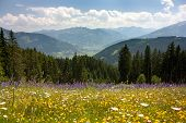 stock photo of hayfield  - View from Austrian Alps around Zell am See  - JPG