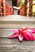 pic of plumeria flower  - pink plumeria flowers on wooden floor - JPG