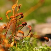 image of spores  - moss spores close up - JPG