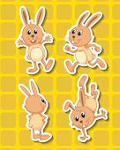 stock photo of wild-rabbit  - Four rabbits in different positions with yellow background - JPG