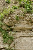 stock photo of mud  - Plant in dried cracked mud on summer day - JPG