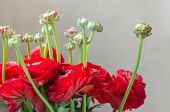 picture of buttercup  - Colorful buttercups bouquet of flowers natural on card macro isolated - JPG