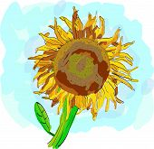 Water Color Sunflower - Vector Illustration