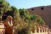 stock photo of skarabaeus  - ancient karnak temple in luxor in egypt - JPG