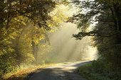 Country road in autumn forest at dawn