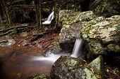 Cascadas en el bosque australiano